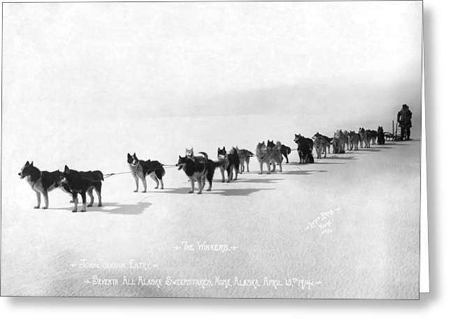 Sled Dogs Greeting Cards - Alaska Champion Dog Sled Team 1914 Greeting Card by Daniel Hagerman