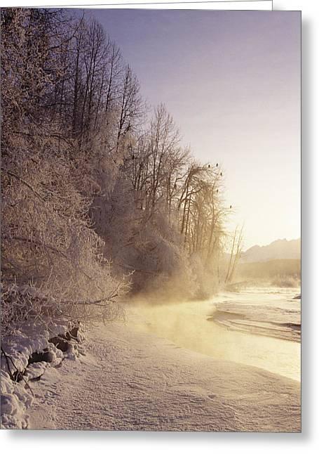 Alaska, Haines Bald Eagle Preserve Greeting Card by John Hyde