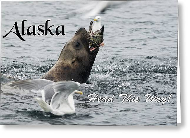 Alaska-head This Way Greeting Card by Ted Raynor