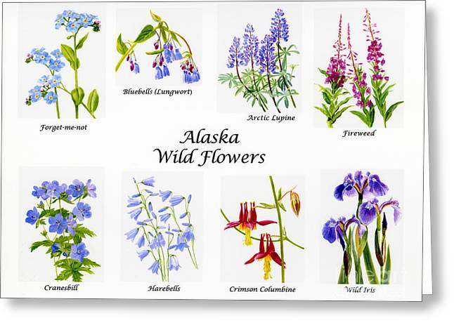 """forget Me Not"" Greeting Cards - Alaska Wild Flower Poster Greeting Card by Sharon Freeman"