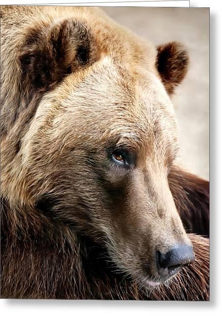 Alaskan Greeting Cards - Alaskan Brown Bear Greeting Card by Jim Hughes