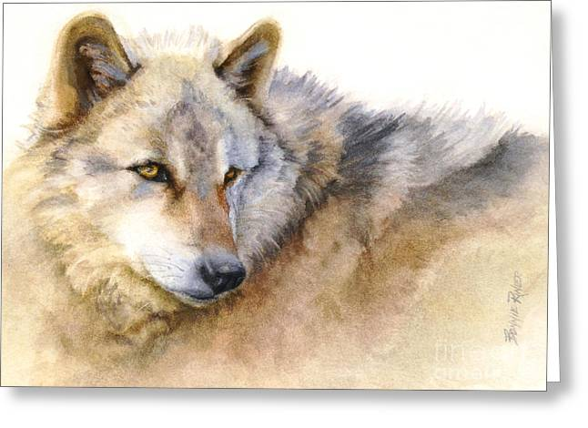 Alaskan Greeting Cards - Alaskan Gray Wolf Greeting Card by Bonnie Rinier