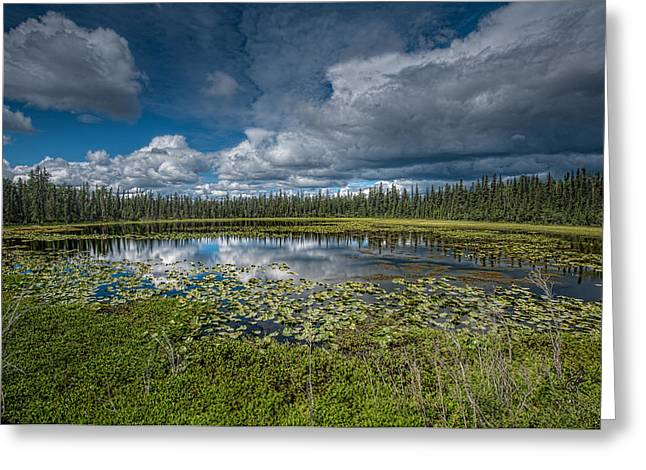 Lilly Pad Greeting Cards - Alaskan Lilly Pads Greeting Card by Jason Lanier
