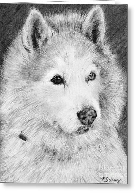 Working Dog Drawings Greeting Cards - Alaskan Malamute Drawing Mardi Greeting Card by Kate Sumners