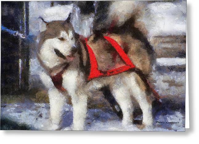 Dogs In Snow. Digital Art Greeting Cards - Alaskan Malamute Photo Art 02 Greeting Card by Thomas Woolworth
