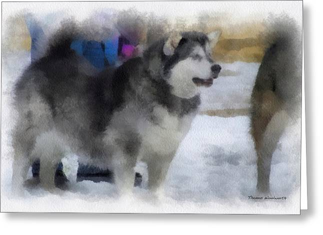 Dogs In Snow. Digital Art Greeting Cards - Alaskan Malamute Photo Art 04 Greeting Card by Thomas Woolworth
