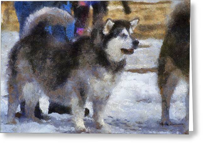 Dogs In Snow. Digital Art Greeting Cards - Alaskan Malamute Photo Art 05 Greeting Card by Thomas Woolworth