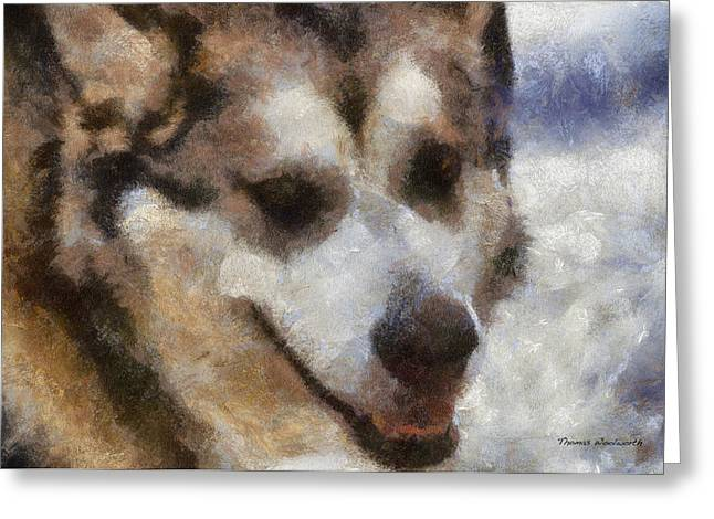Dogs In Snow. Digital Art Greeting Cards - Alaskan Malamute Photo Art 06 Greeting Card by Thomas Woolworth