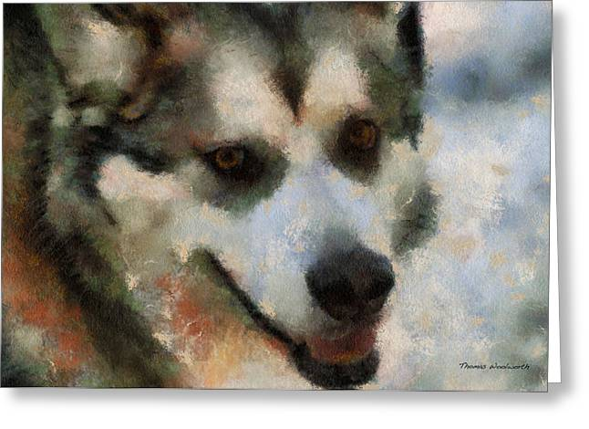 Dogs In Snow. Digital Art Greeting Cards - Alaskan Malamute Photo Art 07 Greeting Card by Thomas Woolworth