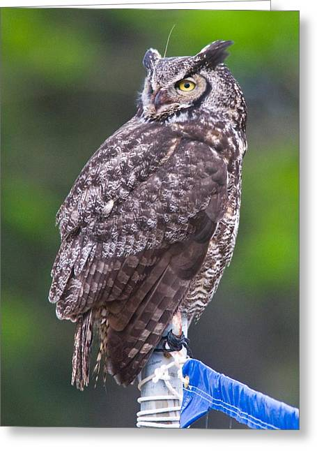 Rep Greeting Cards - Alaskan Owl Greeting Card by National Park Service
