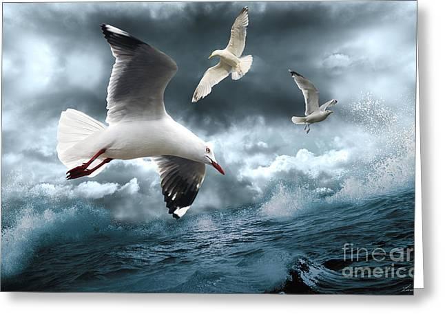 Albatross Greeting Card by Linda Lees
