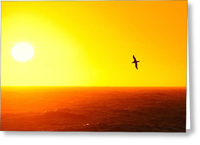 Albatross Over The Scotia Sea Greeting Card by Tony Beck