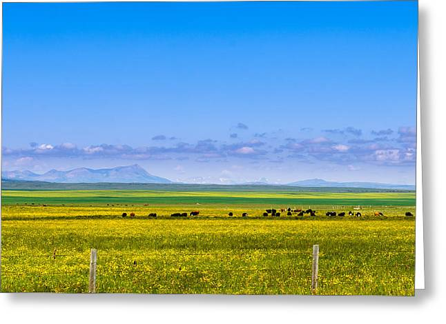 Alberta Foothills Landscape Greeting Cards - Alberta Farmland Greeting Card by Brandon Smith