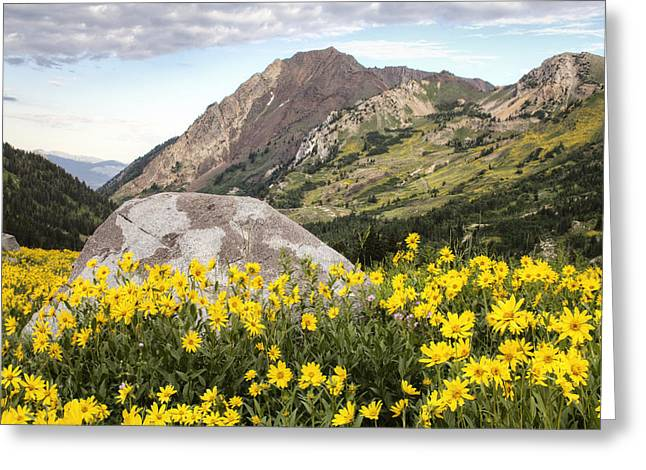 Little Cottonwood Canyon Greeting Cards - Albion Basin 0385 Greeting Card by Bob Hills