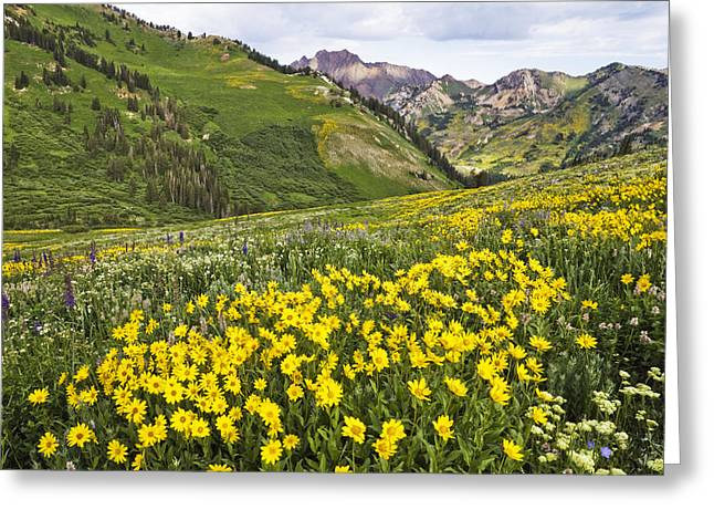 Little Cottonwood Canyon Greeting Cards - Albion Basin 0460 Greeting Card by Bob Hills