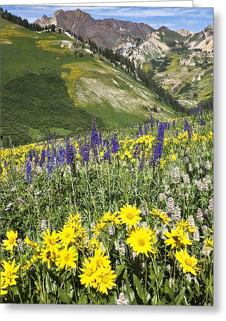 Little Cottonwood Canyon Greeting Cards - Albion Basin 1621 Greeting Card by Bob Hills