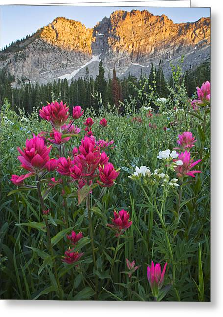 Little Cottonwood Canyon Greeting Cards - Albion Basin 9344 Greeting Card by Bob Hills