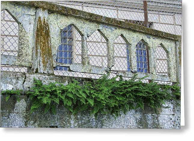 Growing From Rock Greeting Cards - Alcatraz Fern Greeting Card by Daniel Hagerman
