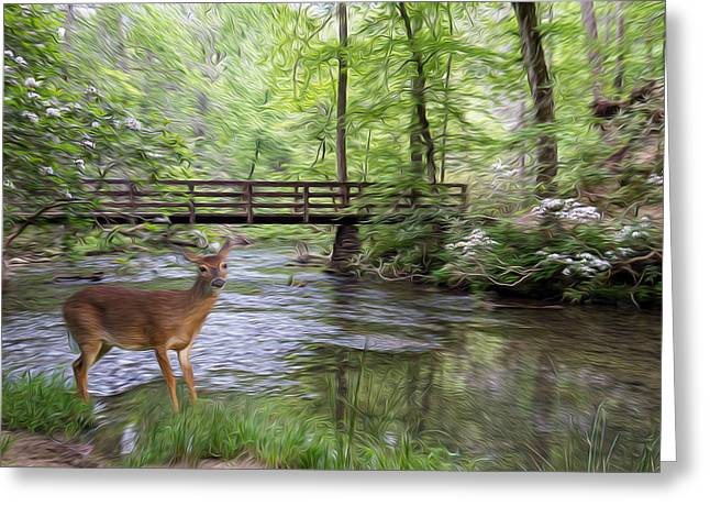 Game Greeting Cards - Alert Deer by Bridge in Cades Cove Greeting Card by Patti Deters