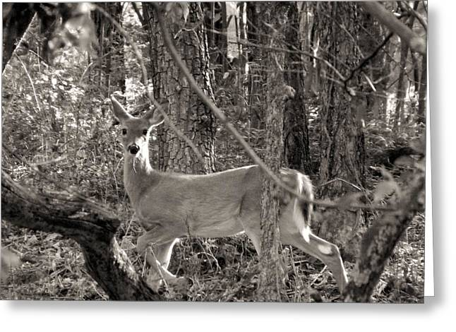 Reign Deer Greeting Cards - Alert Greeting Card by Elizabeth Sullivan