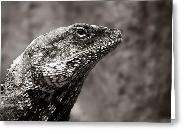 Lizard Head Greeting Cards - Alert Lizard  Greeting Card by Jim Hughes