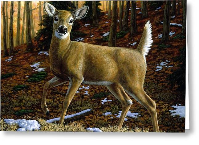 Autumn Prints Greeting Cards - Whitetail Deer - Alerted Greeting Card by Crista Forest