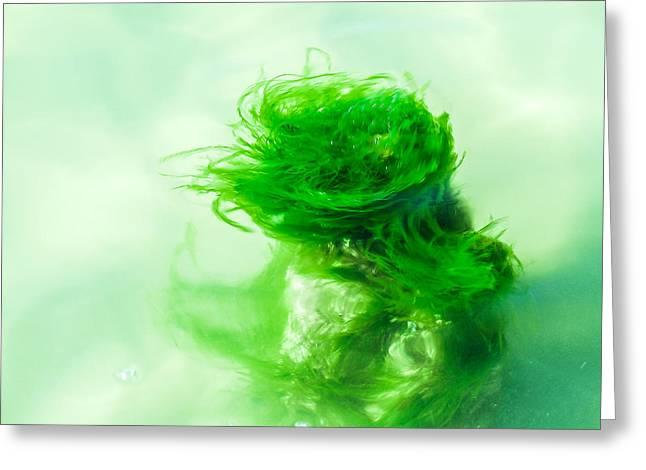 Algae Greeting Cards - Alga Dancer Greeting Card by Hannes Cmarits