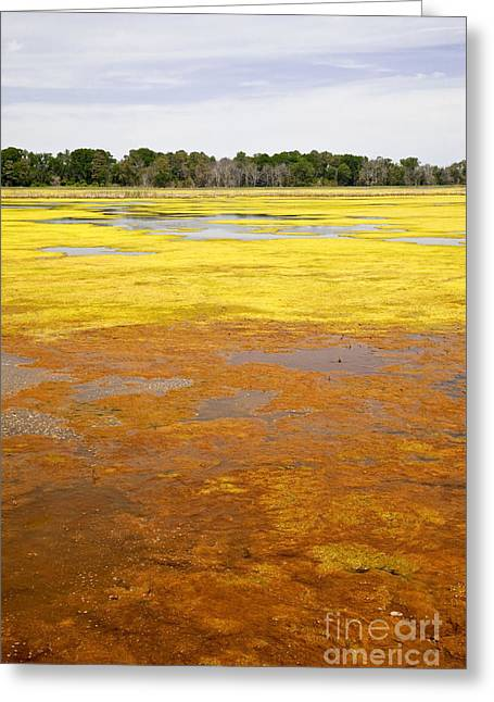 Algae Greeting Cards - Algae Bloom Greeting Card by Michael P Gadomski