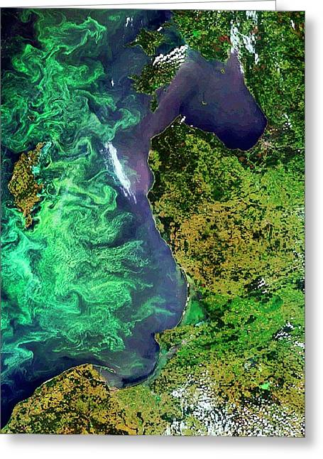 Algal Blooms Greeting Card by European Space Agency