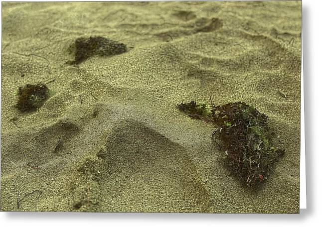 Unicellular Greeting Cards - Algea Left on the Sand Greeting Card by Sandra Pena de Ortiz