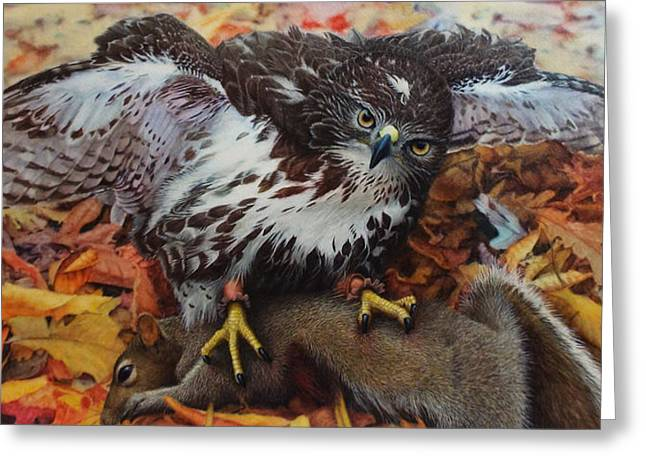 Red-tailed Hawk Greeting Cards - Ali and Quints First Greeting Card by Ken Everett