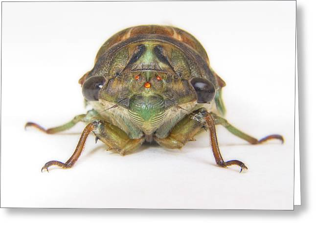 Cicada Greeting Cards - Alien Invasion Greeting Card by David and Carol Kelly