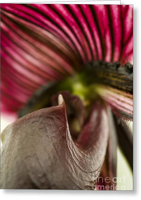 Raisin Greeting Cards - Alien Orchid Greeting Card by Anne Gilbert