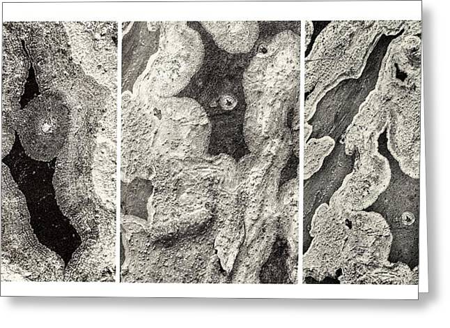 Algae Greeting Cards - Alien Triptych Landscape BW Greeting Card by Rudy Umans