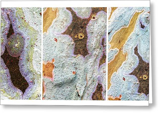 Algae Greeting Cards - Alien Triptych Landscape  Greeting Card by Rudy Umans
