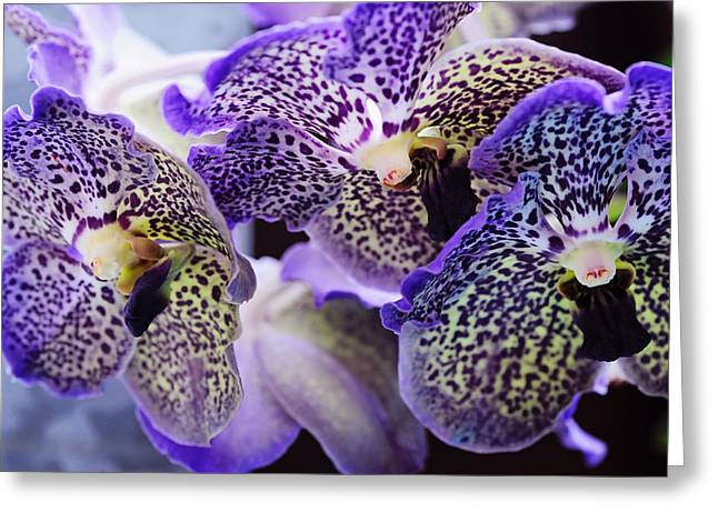 Rainbow Spots Greeting Cards - Aliens. Orchids from Keukenhof. Netherlands Greeting Card by Jenny Rainbow