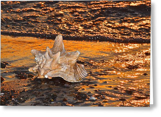 Wave Sublime Greeting Cards - Alight and Aglow Greeting Card by Frozen in Time Fine Art Photography