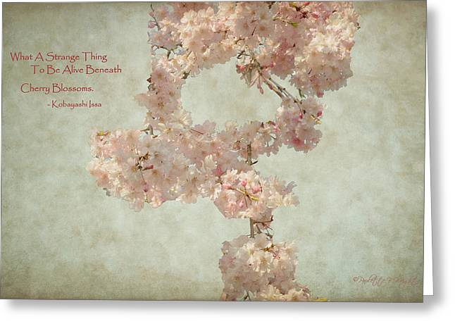 Issa Greeting Cards - Alive Beneath Cherry Blossoms Greeting Card by Paulette B Wright