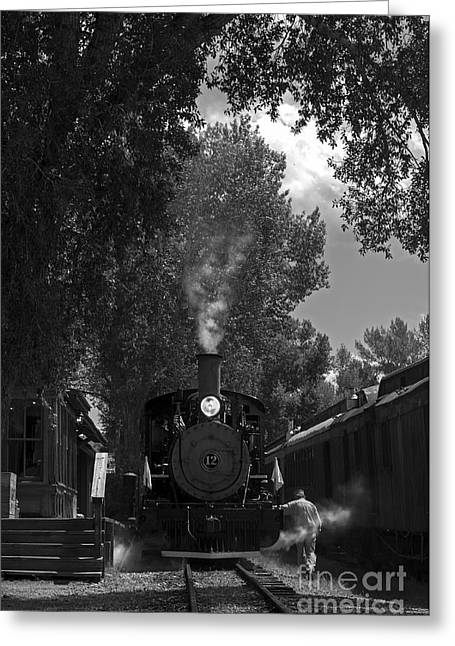Wild Animals Greeting Cards - All Aboard Greeting Card by Wildlife Fine Art