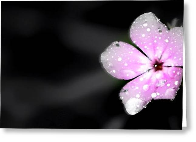 Pinks And Purple Petals Photographs Greeting Cards - All Alone Greeting Card by Debra Forand