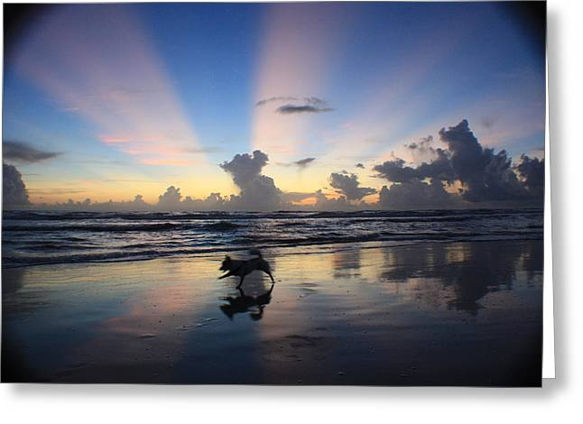 Dog Photographs Greeting Cards - All Dogs go to Heaven  Greeting Card by Mandy Shupp