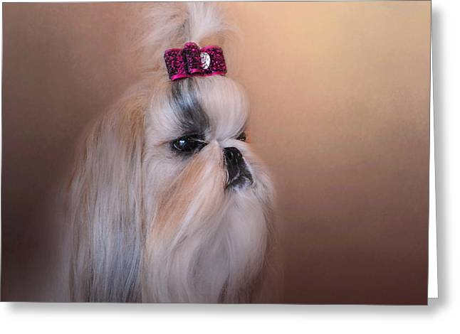 Artistic Photography Greeting Cards - All Dolled Up - Shih Tzu Greeting Card by Jai Johnson