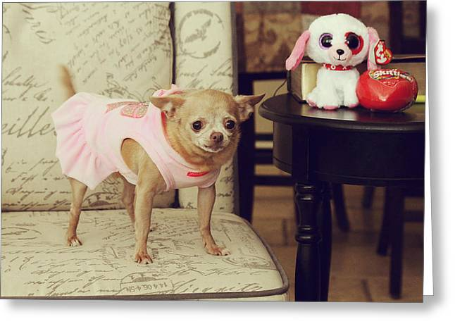 Toy Dogs Greeting Cards - All Dressed Up Greeting Card by Laurie Search