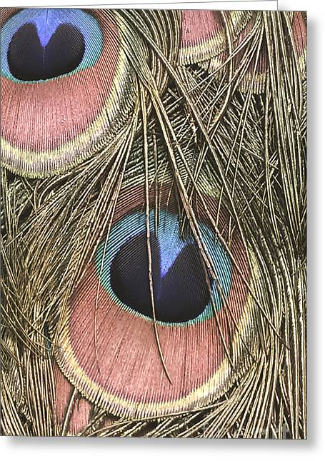Bedroom Art Greeting Cards - All Eyes On Me Greeting Card by Charlie Cliques