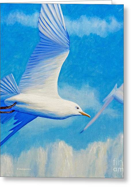 Flying Seagull Greeting Cards - All Fly Home Greeting Card by Brian  Commerford