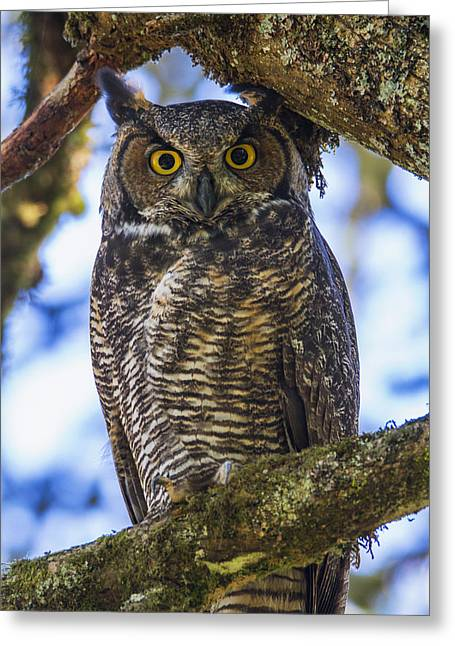 Owl Eyes Greeting Cards - All Grown Up Greeting Card by Angie Vogel