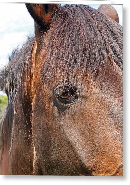 Horse Images Greeting Cards - All I Need Is Love - Sad Horse Greeting Card by Gill Billington