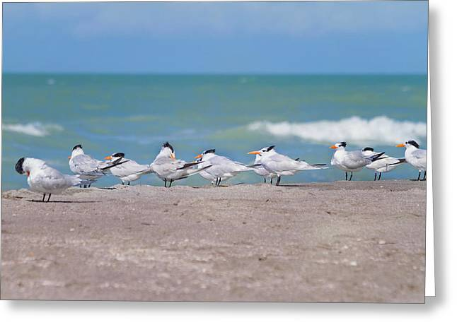 Captiva Greeting Cards - All In A Row Greeting Card by Kim Hojnacki