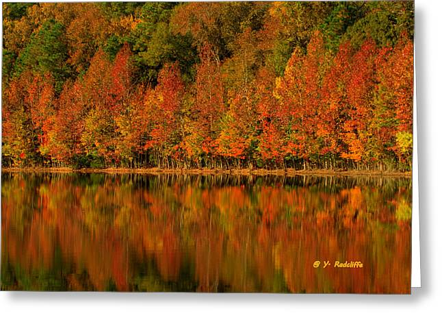 Fallscape Greeting Cards - All in a  Row Greeting Card by Yvette Radcliffe