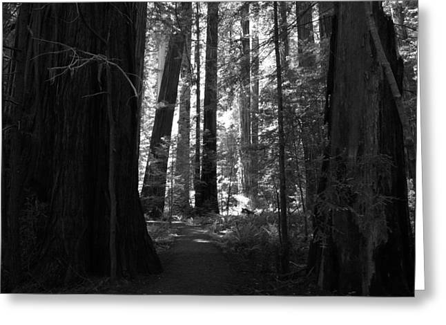 Northern California Parks Greeting Cards - All Is Quiet Greeting Card by Laurie Search